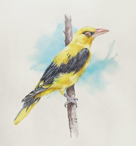 Other Watercolor Art Painting title Yel Bird 1 by artist Kaukab Ahmad
