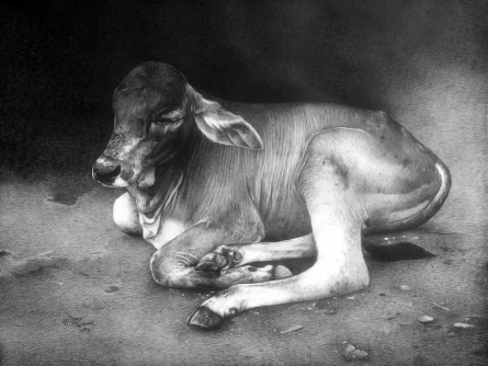 Animals Pen Art Drawing title Cow Child by artist Nagesh Devkar