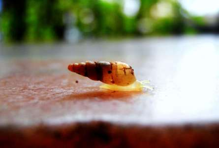 Larva | Photography by artist Rohit Belsare | Art print on Canvas