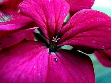 Rohit Belsare | Pink Petals Photography Prints by artist Rohit Belsare | Photo Prints On Canvas, Paper | ArtZolo.com