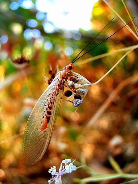 Insect Ii | Photography by artist Rohit Belsare | Art print on Canvas