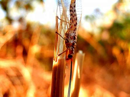 Rohit Belsare | Insect Iv Photography Prints by artist Rohit Belsare | Photo Prints On Canvas, Paper | ArtZolo.com