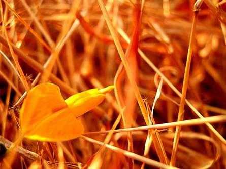 Rohit Belsare | Orange Grass Photography Prints by artist Rohit Belsare | Photo Prints On Canvas, Paper | ArtZolo.com