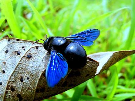 Beetle Blue | Photography by artist Rohit Belsare | Art print on Canvas