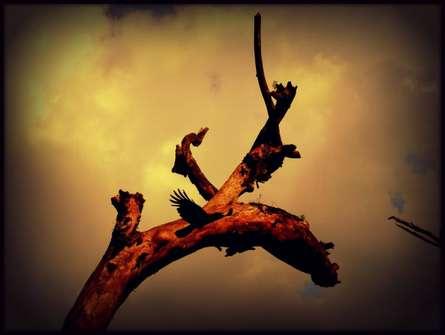 Rohit Belsare | Sun Shine On Tree Photography Prints by artist Rohit Belsare | Photo Prints On Canvas, Paper | ArtZolo.com