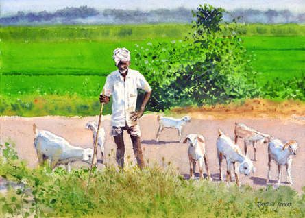 Figurative Watercolor Art Painting title 'Minding His Herd 2' by artist Ramesh Jhawar