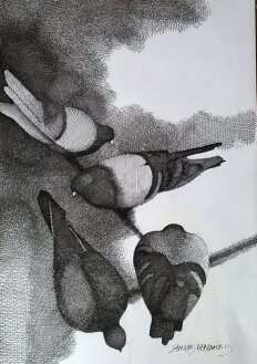 Figurative Pen-ink Art Drawing title 'Pigeons' by artist SHANKAR KENDALE