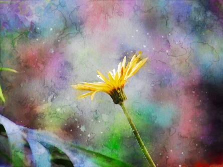 art, digital painting, canvas, nature