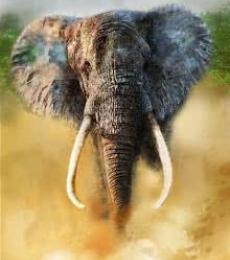 Elephant | Digital_art by artist Rajesh Nayak | Art print on Canvas