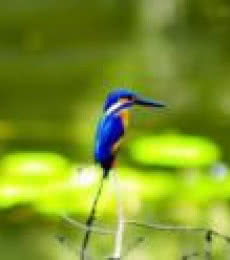 King Fisher | Photography by artist Vaibhav Kadam | Art print on Canvas