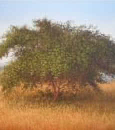 Landscape Oil Art Painting title The Bushy Tree by artist Fareed Ahmed