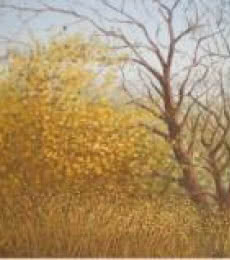 Landscape Oil Art Painting title The Stems by artist Fareed Ahmed