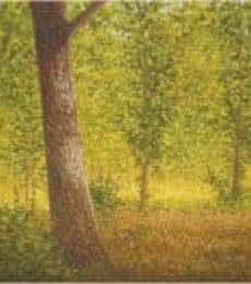 Fareed Ahmed | Oil Painting title Tree Trunk II on Canvas | Artist Fareed Ahmed Gallery | ArtZolo.com