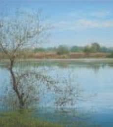 Fareed Ahmed | Oil Painting title Nature Reflection I on Canvas | Artist Fareed Ahmed Gallery | ArtZolo.com