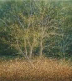 Landscape Oil Art Painting title 'The Tree' by artist Fareed Ahmed