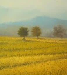 Landscape Oil Art Painting title Yellow farm by artist Fareed Ahmed