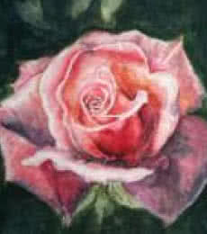 Rosy blush | Painting by artist Lasya Upadhyaya | watercolor | Paper