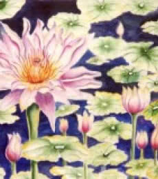 Water Lily | Painting by artist Subodh Maheshwari | watercolor | Paper