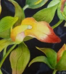 Subodh Maheshwari Paintings | Nature Painting - Cymbidium Orchid (ORIGINAL SOLD) by artist Subodh Maheshwari | ArtZolo.com