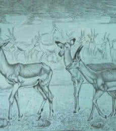 Animals Pencil Art Drawing title 'Deer' by artist Rajendra V