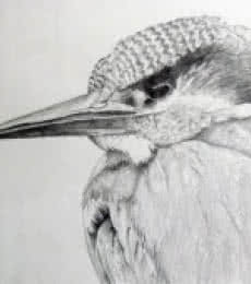 Animals Pencil Art Drawing title 'Kingfisher' by artist Rajendra V
