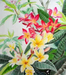 Photorealistic Watercolor Art Painting title Plumerias by artist Vishwajyoti Mohrhoff