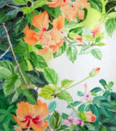 Schizopetalus Hibiscus And Catharanthus | Painting by artist Vishwajyoti Mohrhoff | watercolor | Campap Paper