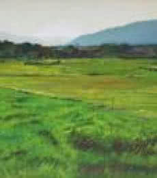 Green Heaven | Painting by artist Sachin Sawant | oil | Canvas