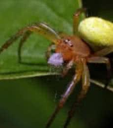 SPIDER & WEB | Photography by artist Rainer Clemens Merk | Art print on Canvas