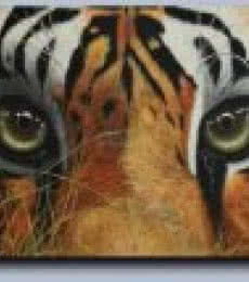 Tiger eyes | Painting by artist Mahesh Jangam | acrylic | Canvas