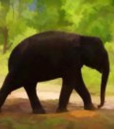 ANIL KUMAR K | Lone Little Giant Digital art Prints by artist ANIL KUMAR K | Digital Prints On Canvas, Paper | ArtZolo.com