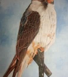 Yashodan Heblekar | Oil Painting title Amur Falcon on Canvas Board | Artist Yashodan Heblekar Gallery | ArtZolo.com