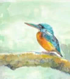 Animals Watercolor Art Painting title 'Blue Eared Kingfisher' by artist Yashodan Heblekar