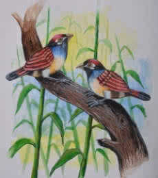 Birds Painting 31 | Painting by artist - - | watercolor | -