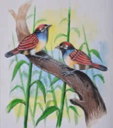 santosh patil Paintings | Animals Painting - Birds Painting 25 by artist santosh patil | ArtZolo.com