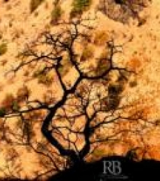Shadowed Tree | Photography by artist Rohit Belsare | Art print on Canvas