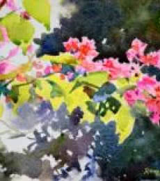 Nature Watercolor Art Painting title 'Bougainvilleas' by artist Ramesh Jhawar