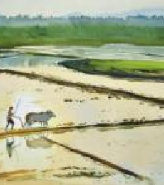 Nature Watercolor Art Painting title 'Golden Fields' by artist Ramesh Jhawar