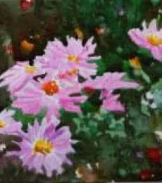 Ramesh Jhawar | Watercolor Painting title Flowers on Paper | Artist Ramesh Jhawar Gallery | ArtZolo.com