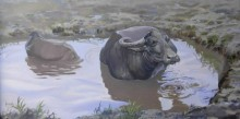 Animals Acrylic Art Painting title 'The Buffalo' by artist Bijay Biswaal
