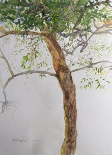Nature Watercolor Art Painting title The New Birth Of The Tree by artist Avishkar Vispute