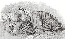 Animals Pen Art Drawing title 'Brothers' by artist Surya Murthy