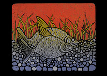Arvind Sharma | Bream Printmaking by artist Arvind Sharma | Printmaking Art | ArtZolo.com