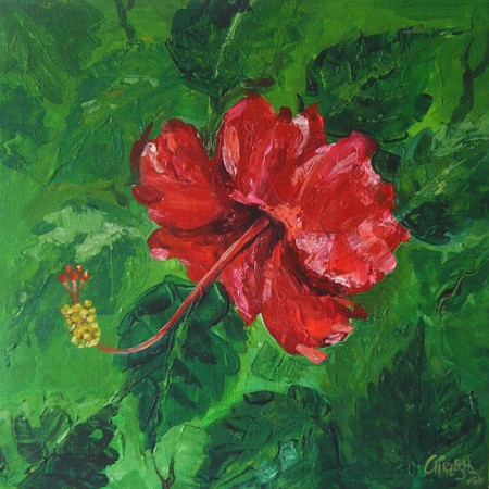 Hibiscus5 13 X 13 Inches By Gireesh Vengara