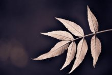 Leaves | Photography by artist Sawant Tandle | Art print on Canvas