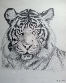 Animals Pencil Art Drawing title Bengal Tiger by artist Rajendra V