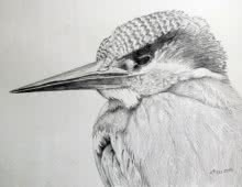 Animals Pencil Art Drawing title Kingfisher by artist Rajendra V