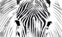 Suraj Lazar | Zebra Digital art Prints by artist Suraj Lazar | Digital Prints On Canvas, Paper | ArtZolo.com