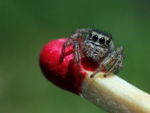 JUMPING SPIDER | Photography by artist Rainer Clemens Merk | Art print on Canvas