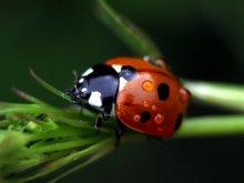 Ladybird | Photography by artist Rainer Clemens Merk | Art print on Canvas